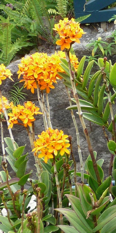 Un bouquet d orchides de la Runion pour Anne  Laure   Le blog de Jacqueline Dallem