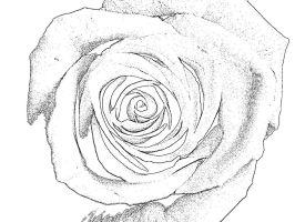 Malvorlage Rose Einfach   Vorlagen zum Ausmalen gratis ...
