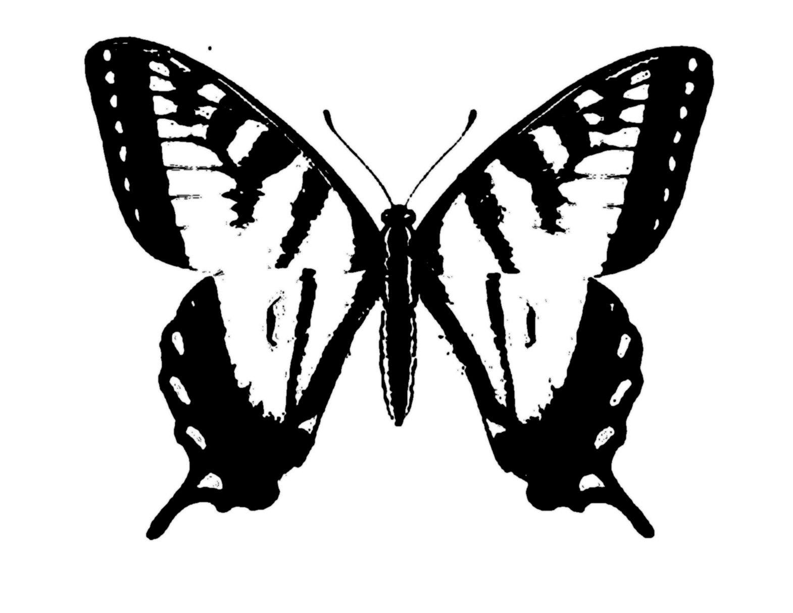 Ausmalbilder Schmetterling Pdf - Ausmalbilder