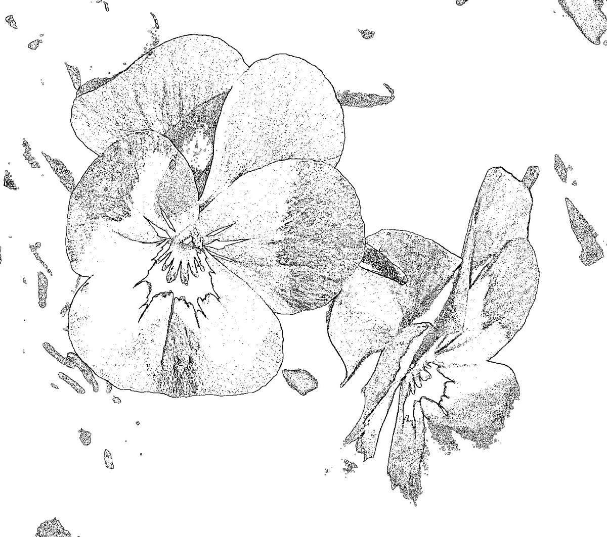 Malvorlagen - Ausmalbilder - Frühling - Malen und Zeichnen