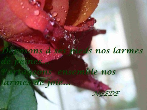 rose-pleure.jpg