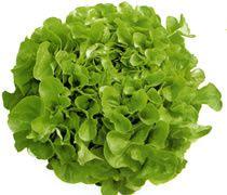 27976035la-salade-feuille-chene-jpg.jpg