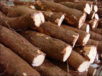 tubercules-de-manioc-1.jpg