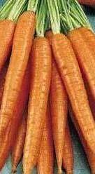 Gratin-de-carottes-et-poireaux.jpg