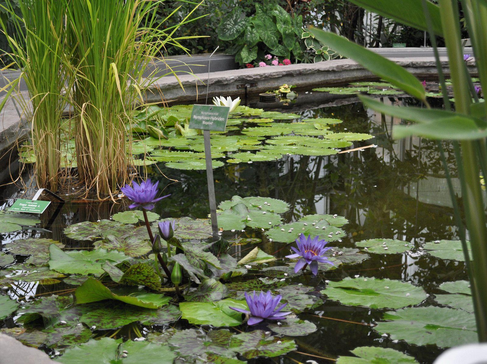 Foto´s vom Botanischen Garten - als freie Malvorlage