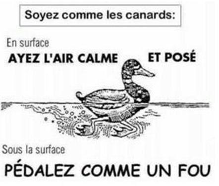 Résultats de recherche d'images pour «canard calme en surface»
