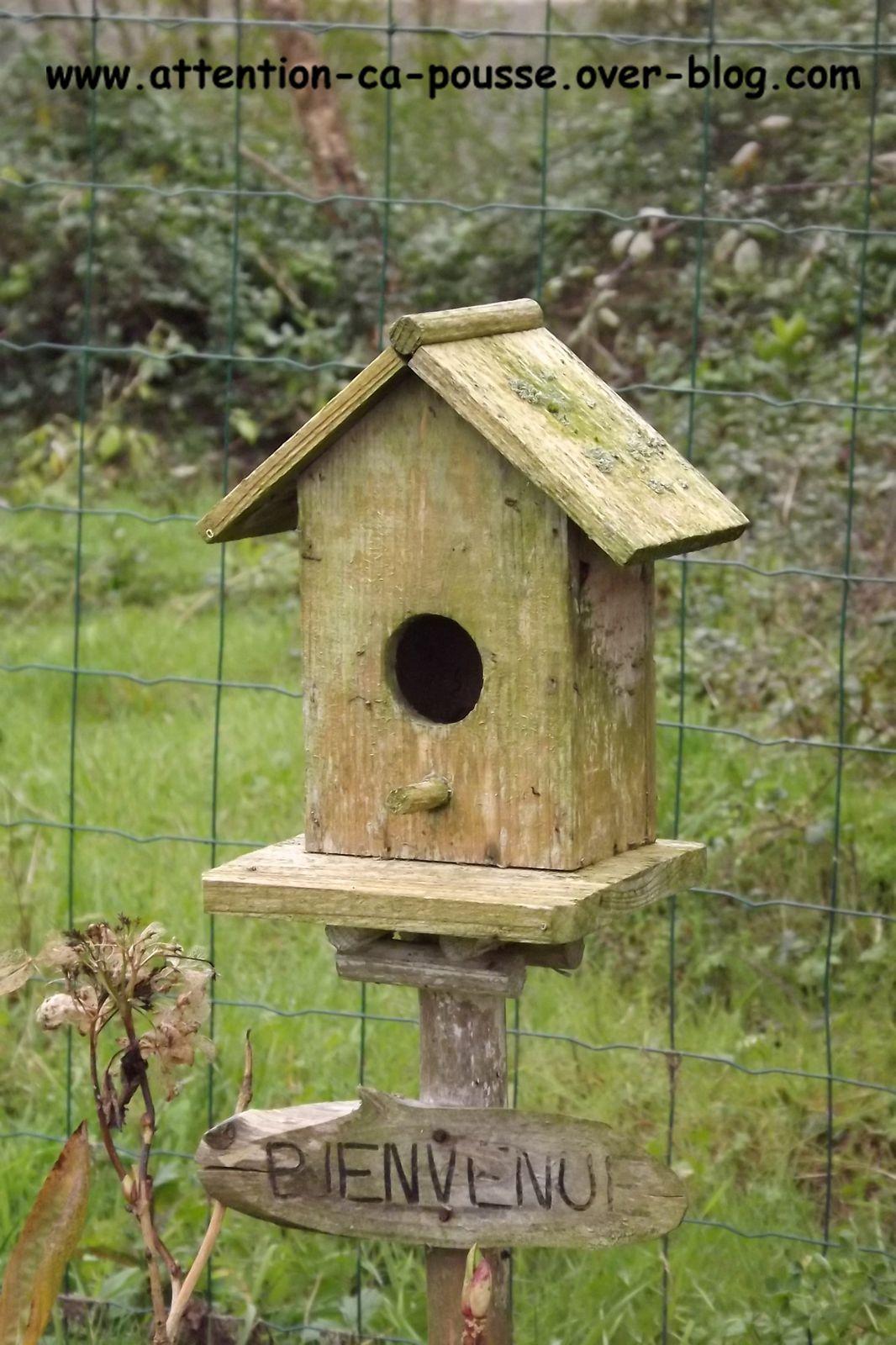 Nichoirs Oiseaux Attention A Pousse