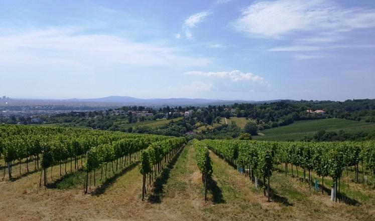 vineyard di vienna austria