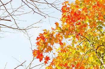 秋の紅葉と黄葉