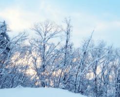 雪が積もった木立