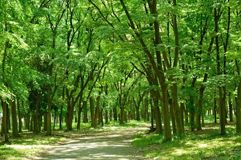 緑葉の木立