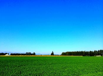秋空と緑の野原
