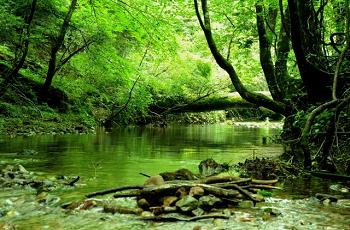 森の中の湖