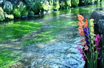 小川と色彩豊かな草々