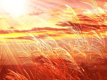 秋の日の夕暮れの風景