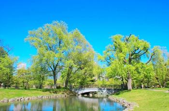 五月晴れの青い空と新緑