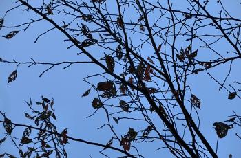 木枯らしに吹かれる木々