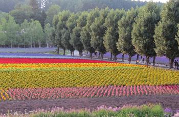 美しい花畑