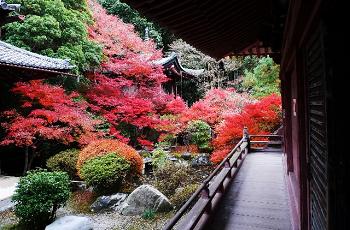 京都山科の紅葉