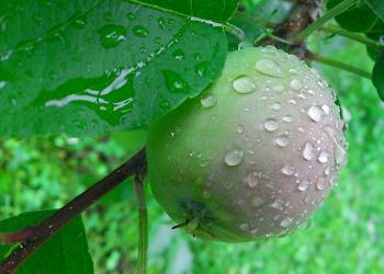 雨に濡れる木の実