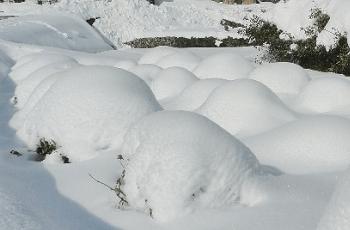 降り積もった雪
