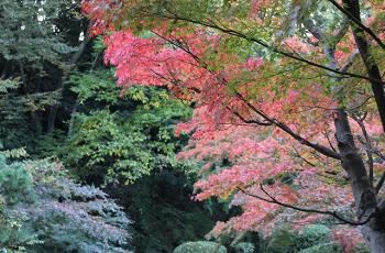 下葉の紅葉