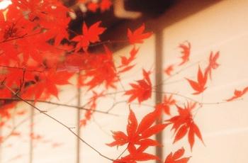 紅葉と障子