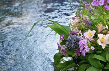 小川の花々