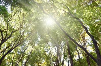林の中の木漏れ日