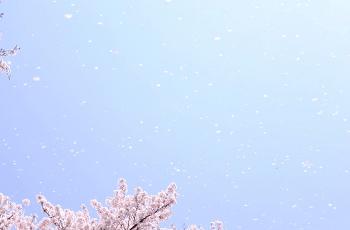 春の青空に舞う桜吹雪