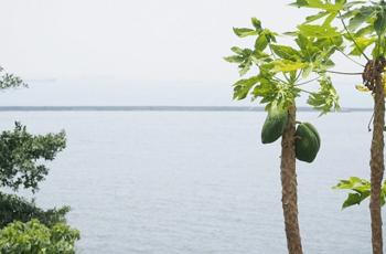 パパイヤの木と海