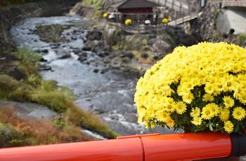 川の欄干に置かれた黄色い菊の花