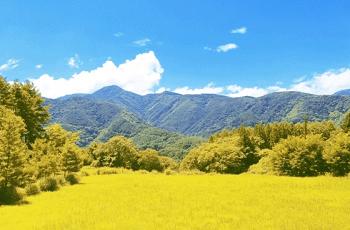 秋の山の風景