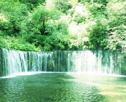 森の中の滝の風景