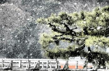 春の雪と桜の花