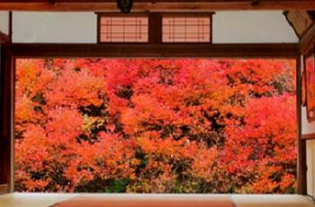 和室から眺めた真っ赤な紅葉