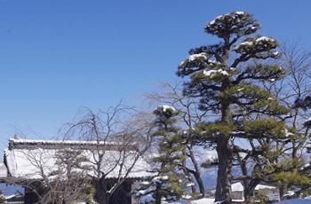 松の木に積もった雪