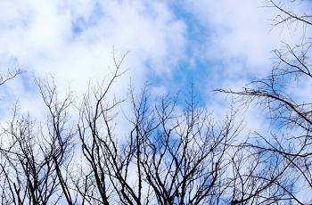冬の枯れ木と寒空