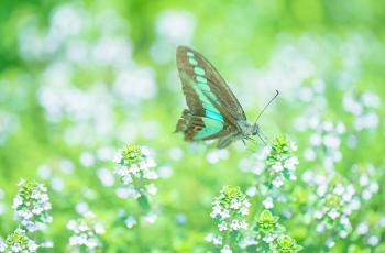 緑の草原を飛ぶ蝶