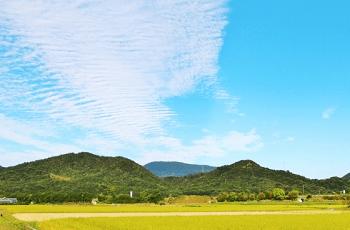 二筋の鰯雲