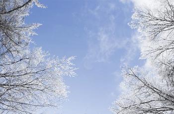 雪に覆われた木立と冬の空