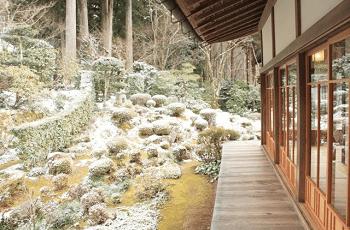 雪が降った朝の庭