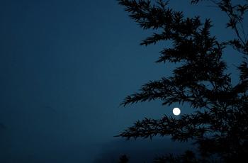 木の影と月