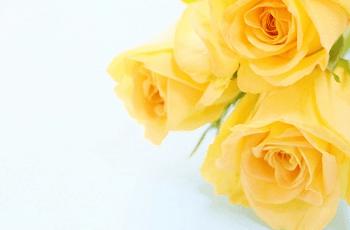 黄色い薔薇の花