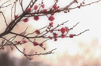 赤い梅の花に降り注ぐ日射し
