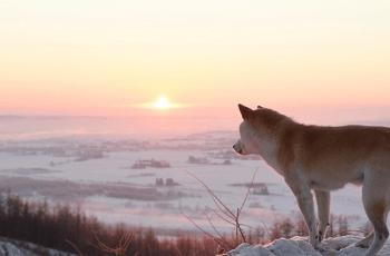 冬の夕日を見つめる犬