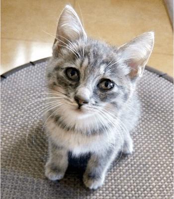 こちらを見上げている子猫