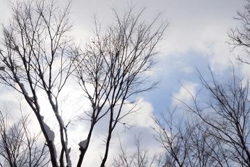 木の枝に残る雪と冬の空