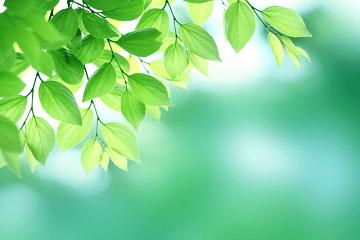 鮮やかな緑色の新緑