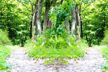 二つに分かれた森の中の道